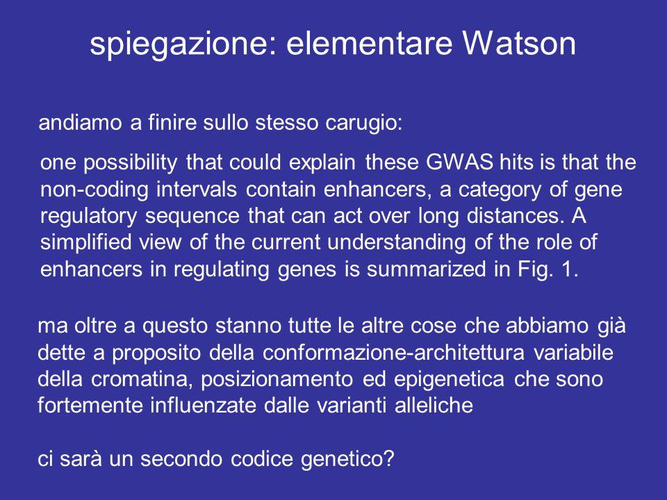 spiegazione: elementare Watson