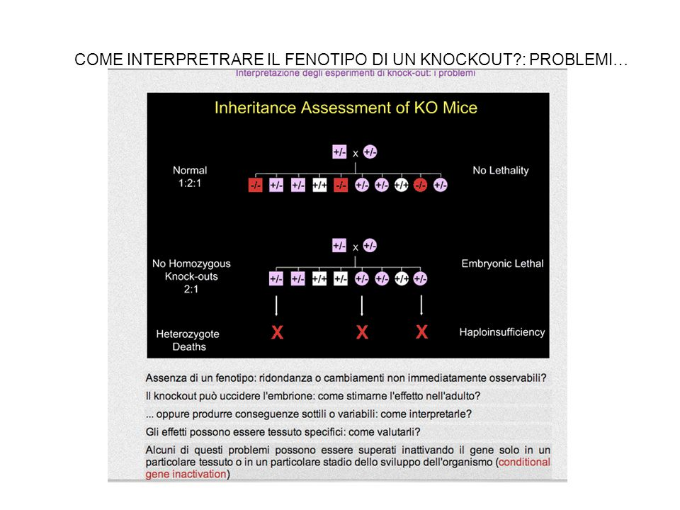 COME INTERPRETRARE IL FENOTIPO DI UN KNOCKOUT : PROBLEMI…