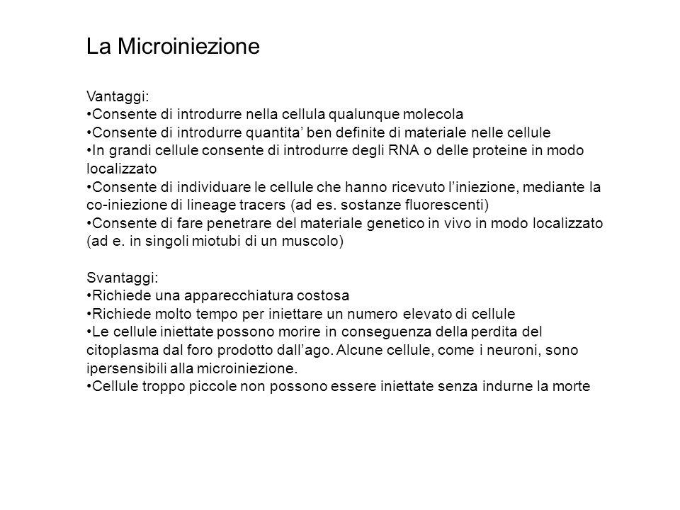 La Microiniezione Vantaggi:
