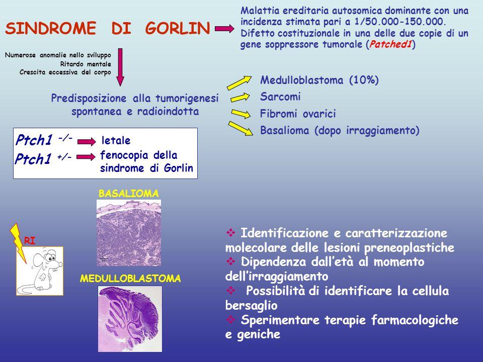 Predisposizione alla tumorigenesi spontanea e radioindotta