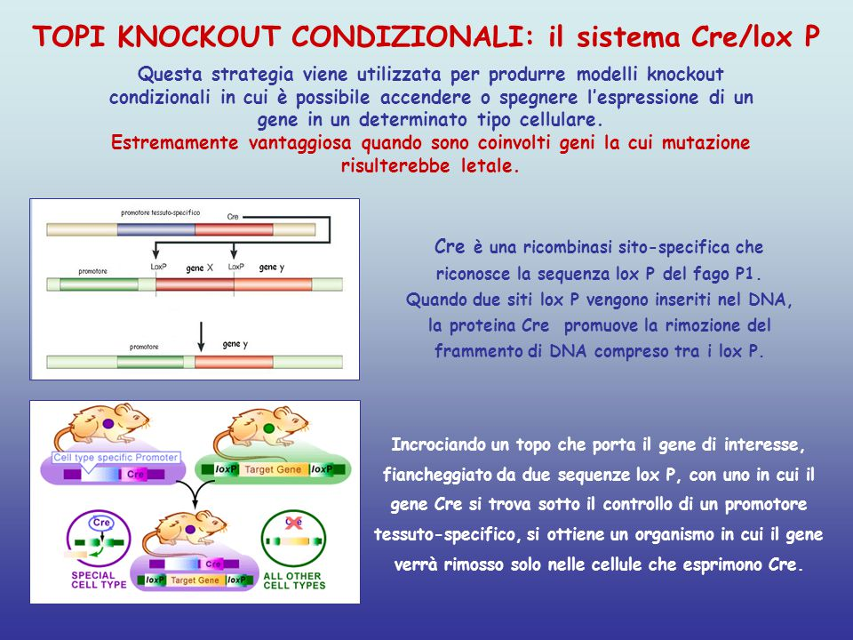 TOPI KNOCKOUT CONDIZIONALI: il sistema Cre/lox P
