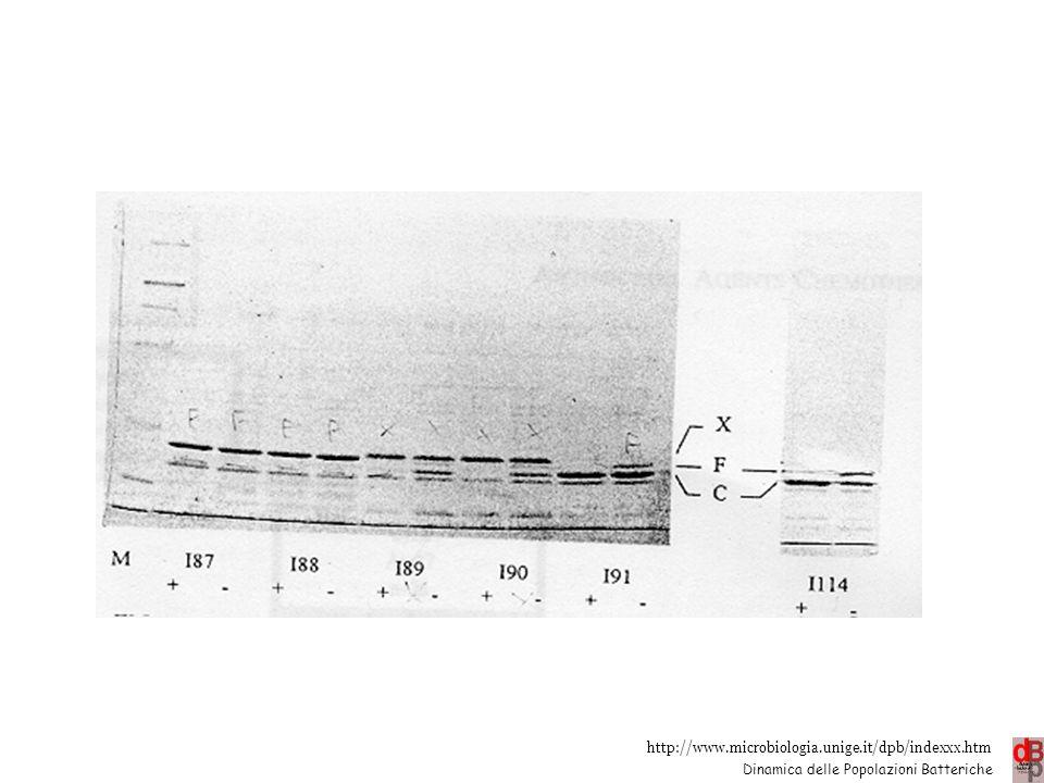 Impermeabilità Alterate o assenti OMP es. chinoloni e -lattamici 21