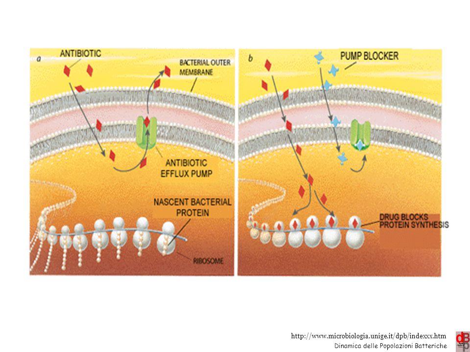 Efflusso es.: tetracicline (tet), macrolidi (mef) , chinoloni (nor) 22