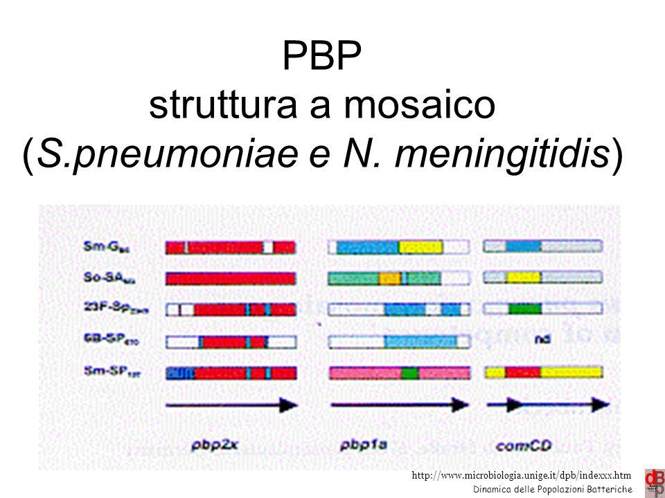 PBP struttura a mosaico (S.pneumoniae e N. meningitidis)