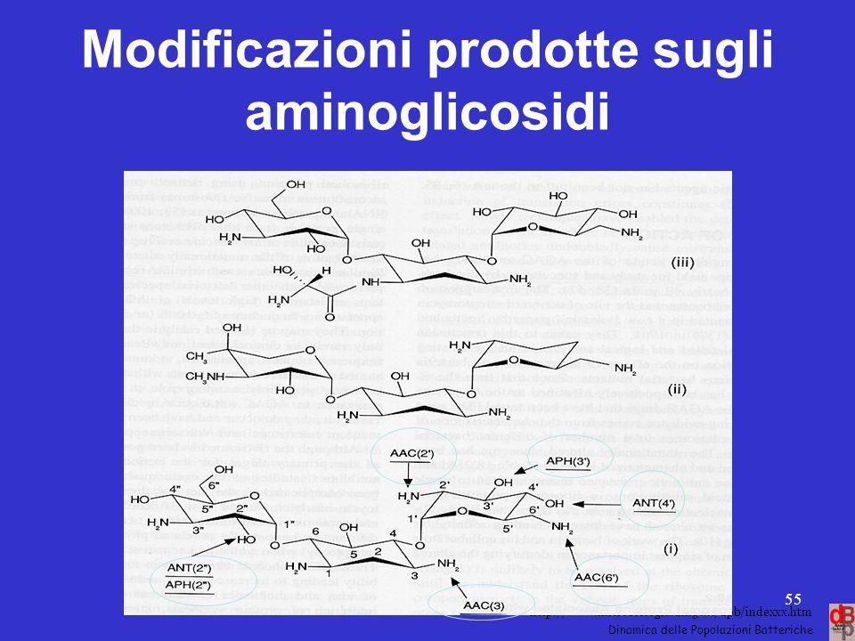 Modificazioni prodotte sugli aminoglicosidi