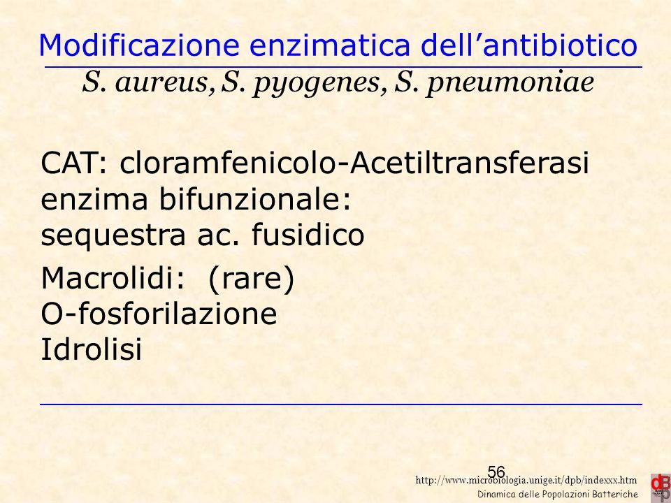 Macrolidi: (rare) O-fosforilazione Idrolisi