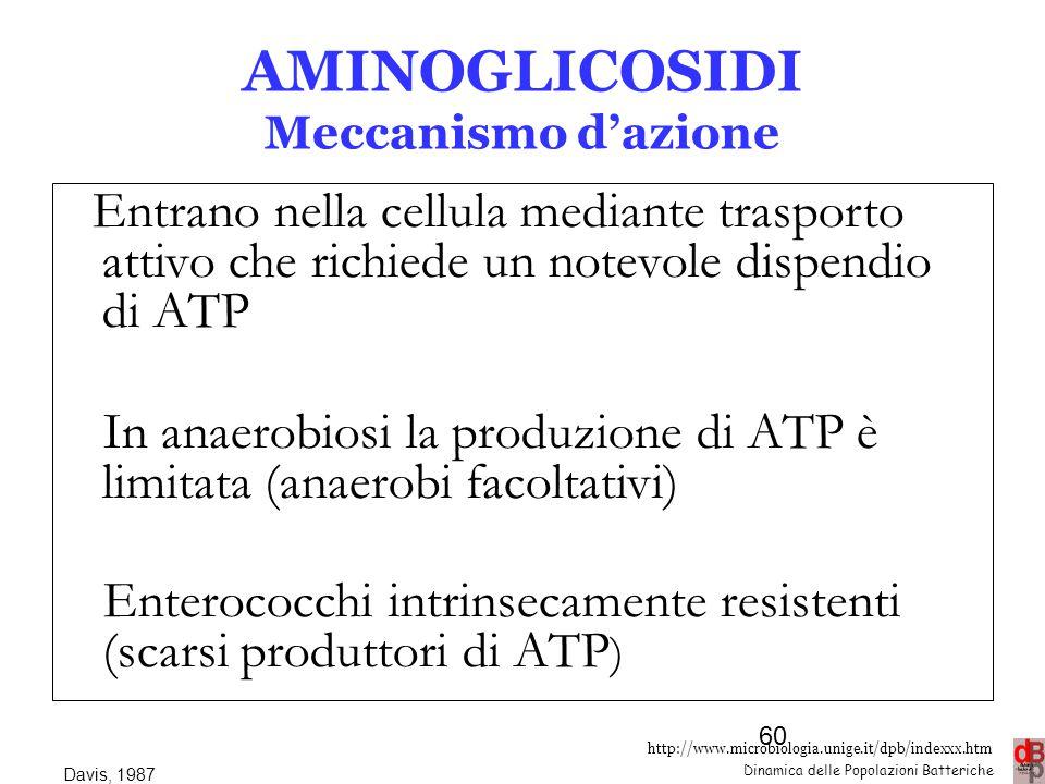 AMINOGLICOSIDI Meccanismo d'azione