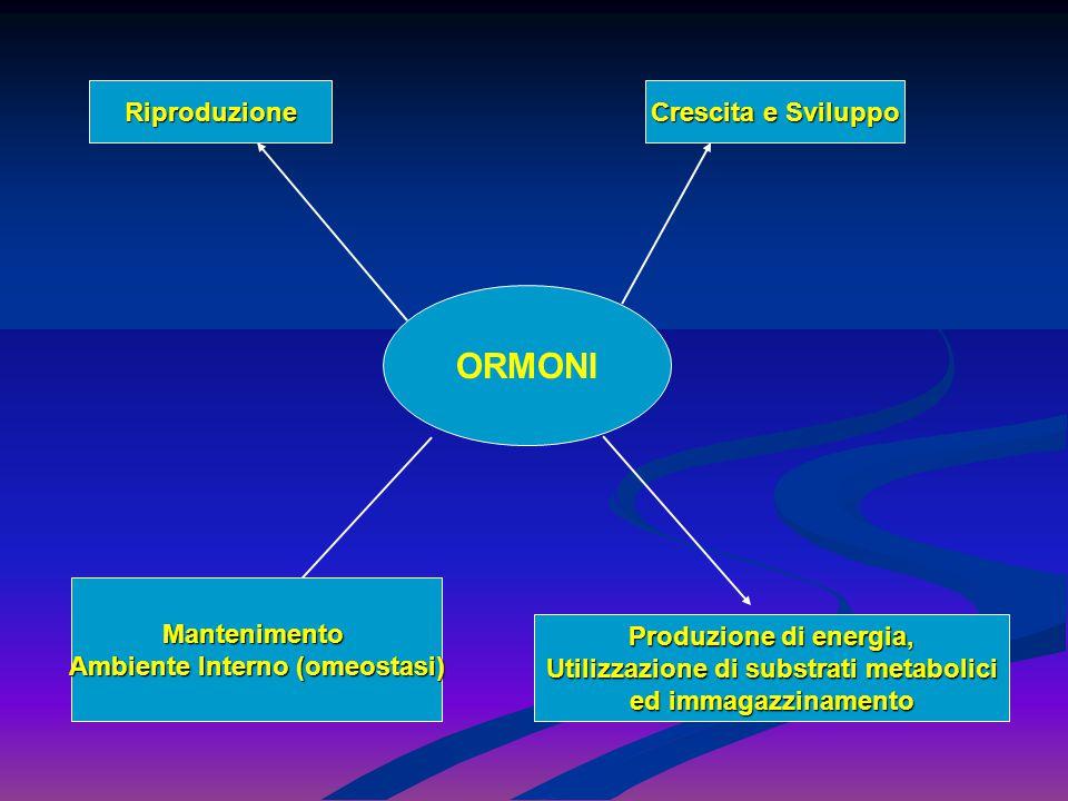 Ambiente Interno (omeostasi) Utilizzazione di substrati metabolici