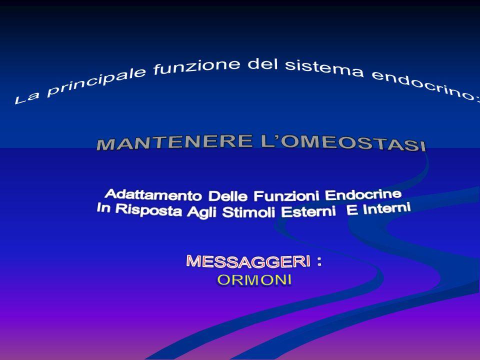 La principale funzione del sistema endocrino: