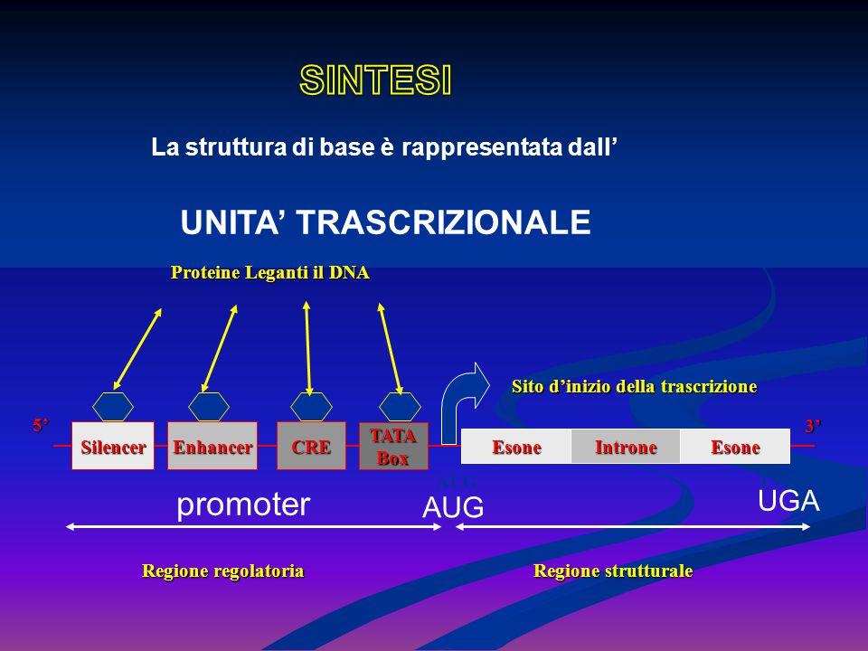 La struttura di base è rappresentata dall' UNITA' TRASCRIZIONALE