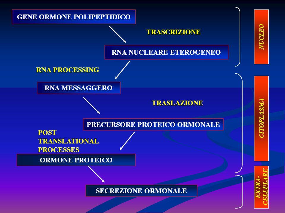 GENE ORMONE POLIPEPTIDICO