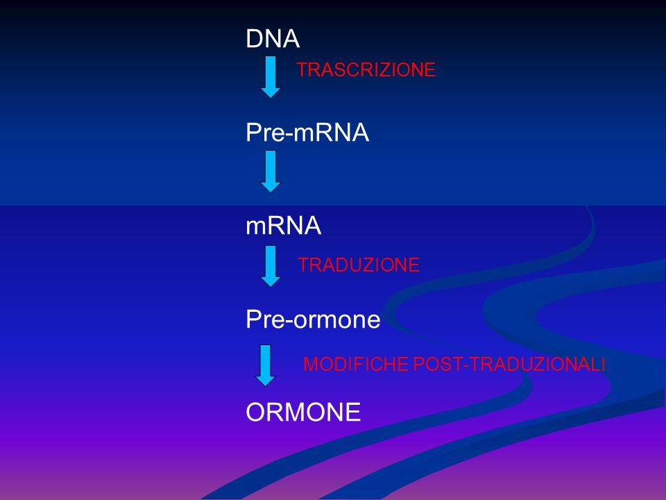 DNA Pre-mRNA mRNA Pre-ormone ORMONE TRASCRIZIONE TRASCRIZIONE