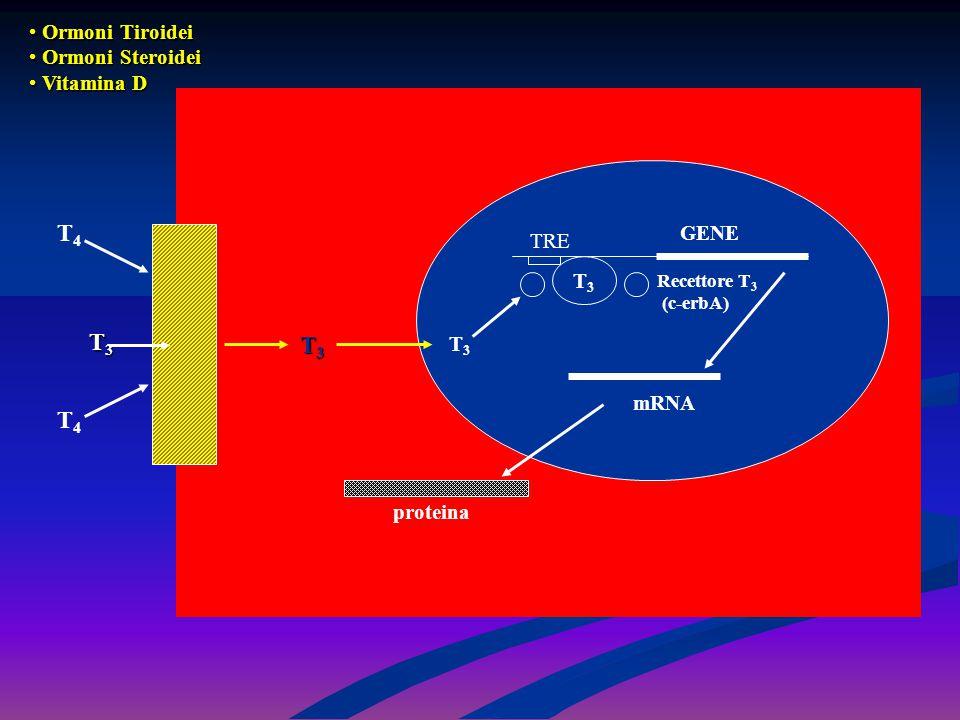 T4 T3 T3 T4 Ormoni Tiroidei Ormoni Steroidei Vitamina D GENE TRE T3 T3