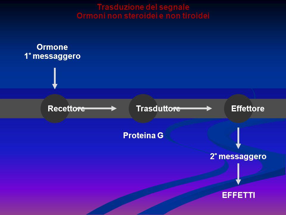 Trasduzione del segnale Ormoni non steroidei e non tiroidei