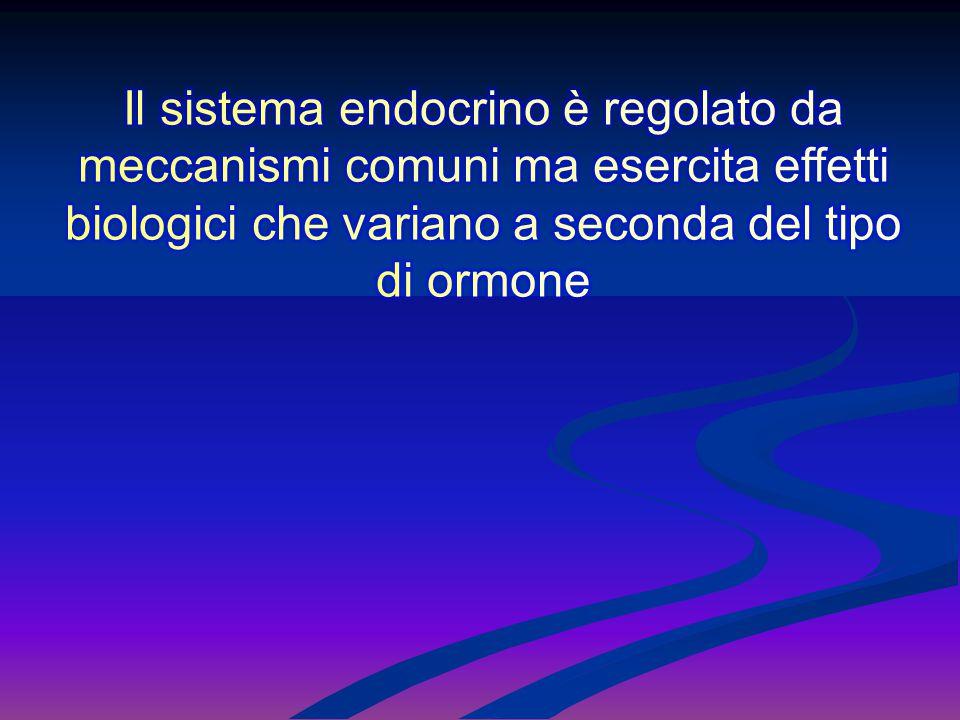 Il sistema endocrino è regolato da meccanismi comuni ma esercita effetti biologici che variano a seconda del tipo di ormone