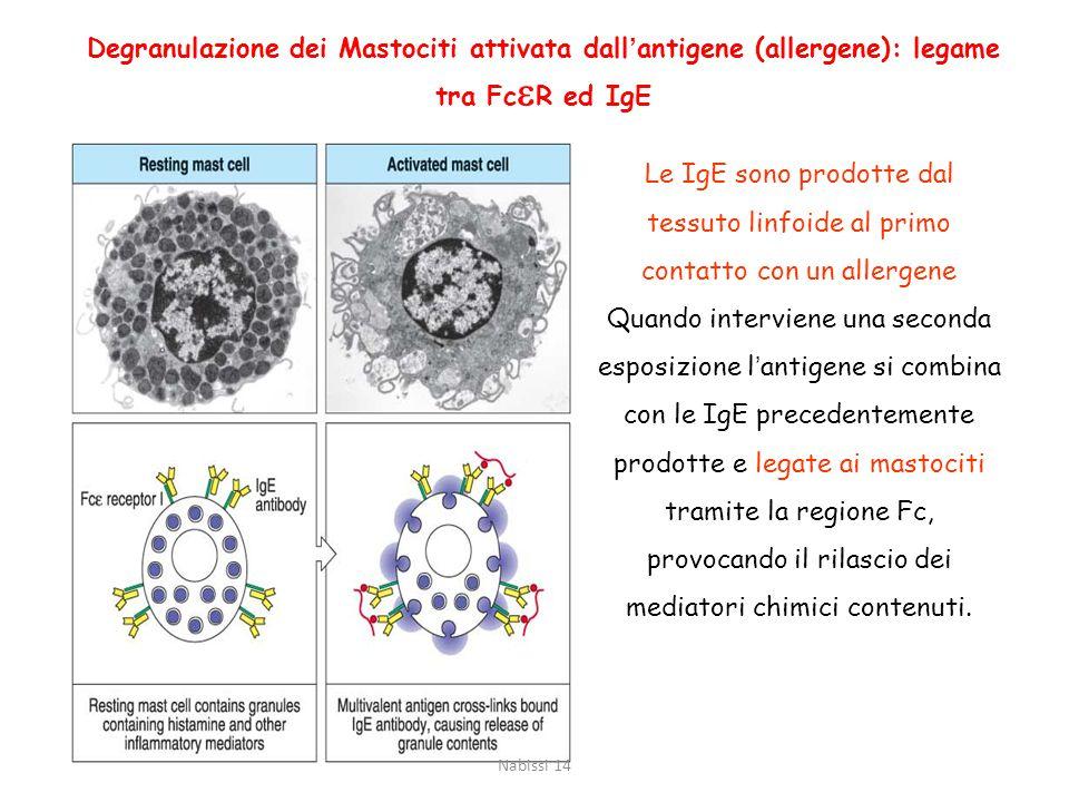 Degranulazione dei Mastociti attivata dall'antigene (allergene): legame tra FceR ed IgE