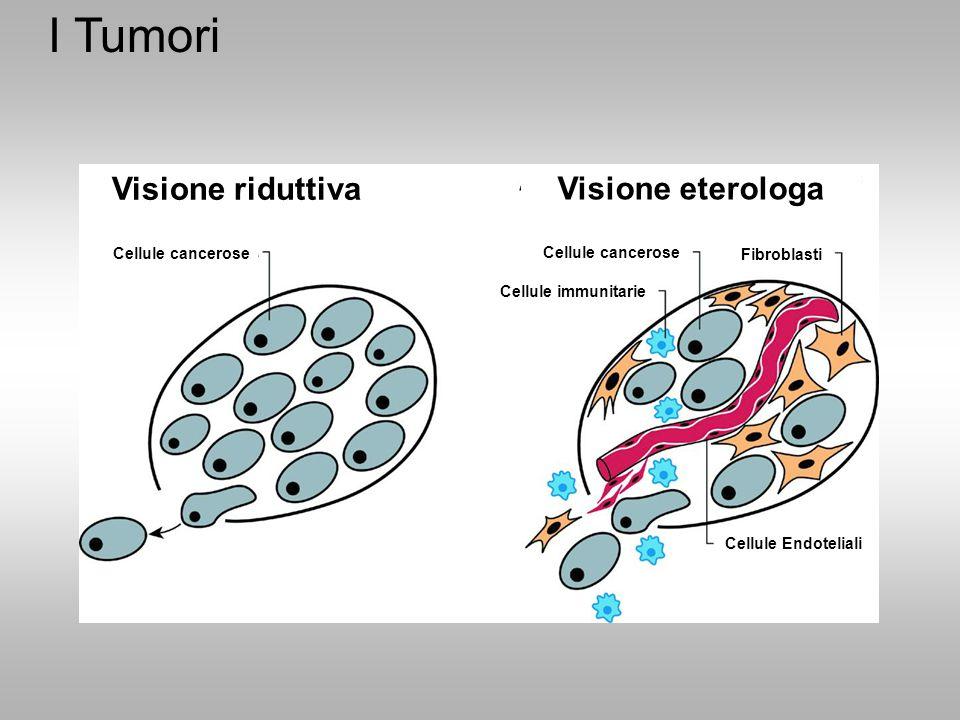 I Tumori Visione riduttiva Visione eterologa Cellule cancerose