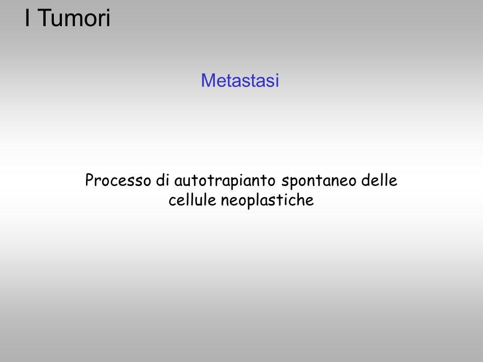 Processo di autotrapianto spontaneo delle cellule neoplastiche