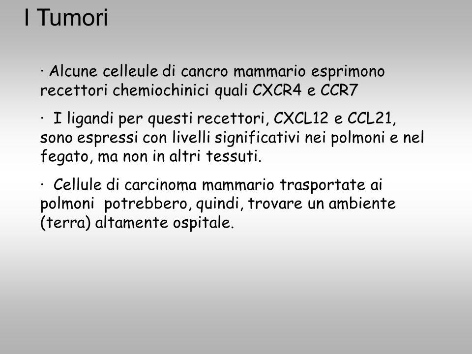 I Tumori · Alcune celleule di cancro mammario esprimono recettori chemiochinici quali CXCR4 e CCR7.