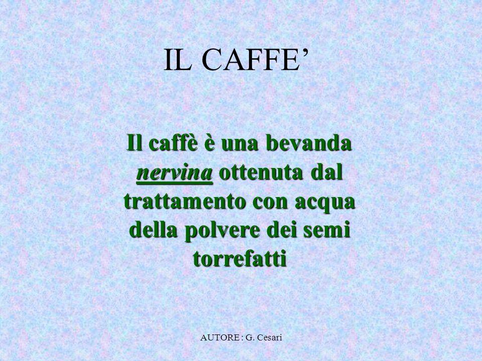 IL CAFFE' Il caffè è una bevanda nervina ottenuta dal trattamento con acqua della polvere dei semi torrefatti.