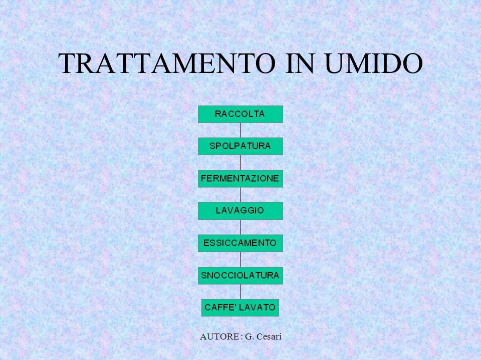 TRATTAMENTO IN UMIDO AUTORE : G. Cesari