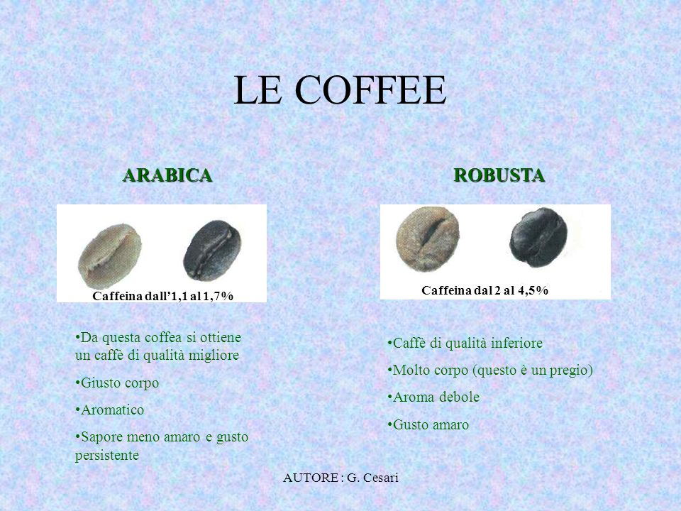 LE COFFEE ARABICA ROBUSTA