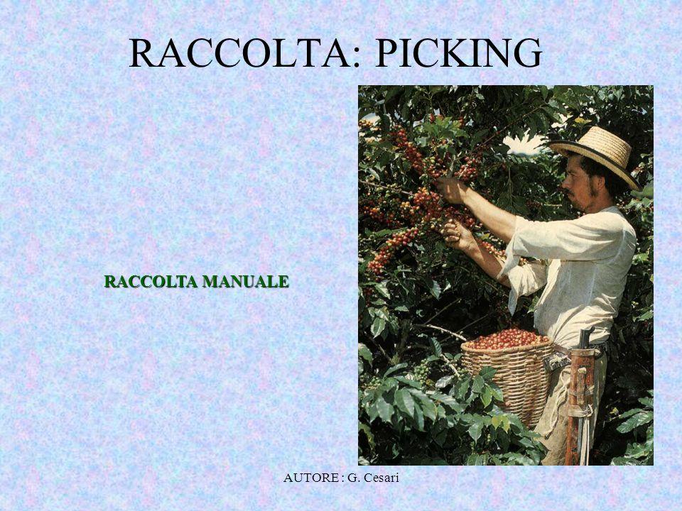 RACCOLTA: PICKING RACCOLTA MANUALE AUTORE : G. Cesari