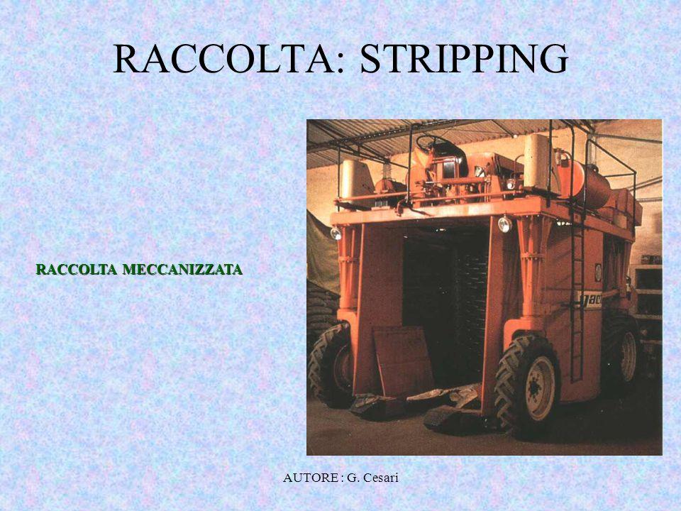 RACCOLTA: STRIPPING RACCOLTA MECCANIZZATA AUTORE : G. Cesari