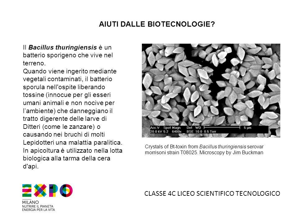 AIUTI DALLE BIOTECNOLOGIE