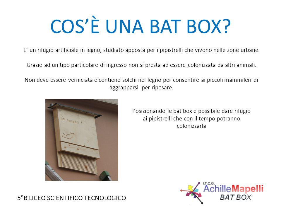 COS'È UNA BAT BOX E' un rifugio artificiale in legno, studiato apposta per i pipistrelli che vivono nelle zone urbane.