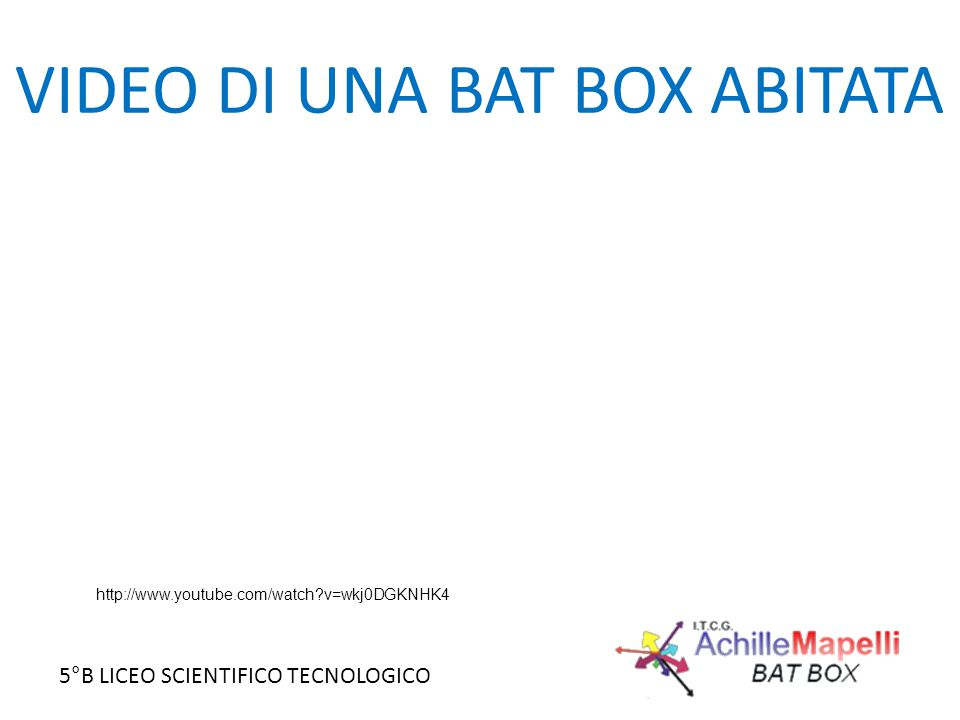 VIDEO DI UNA BAT BOX ABITATA