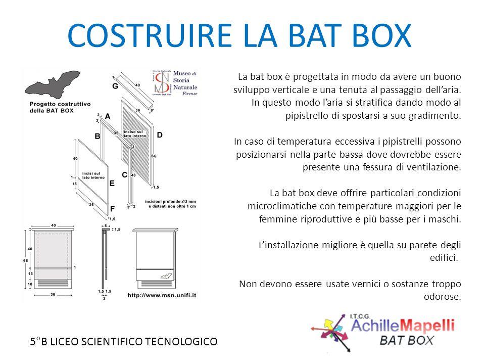 COSTRUIRE LA BAT BOX