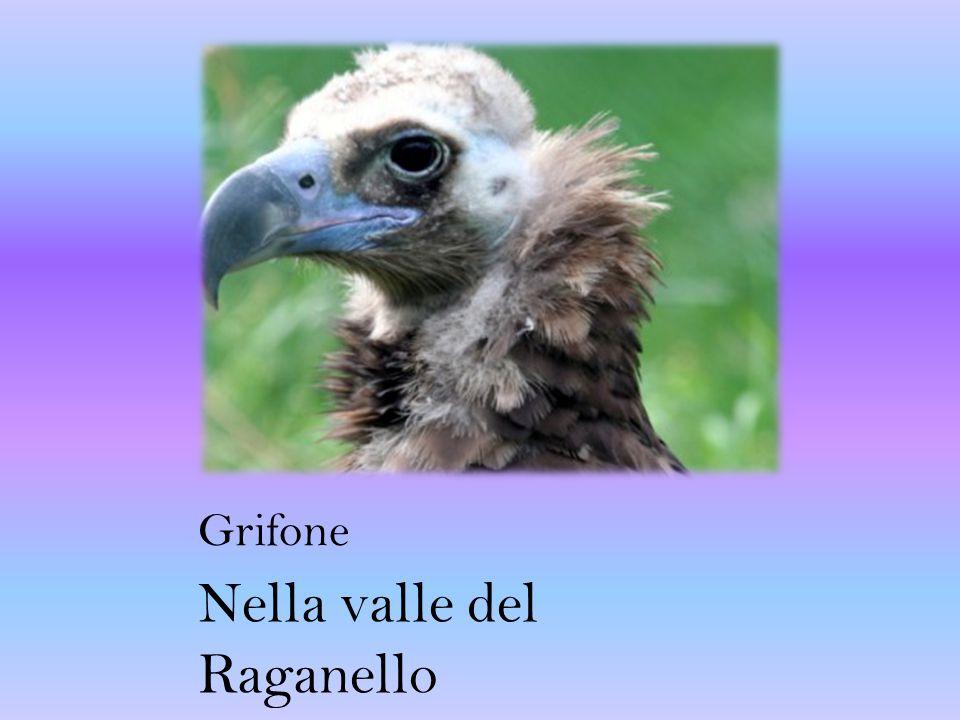 Nella valle del Raganello
