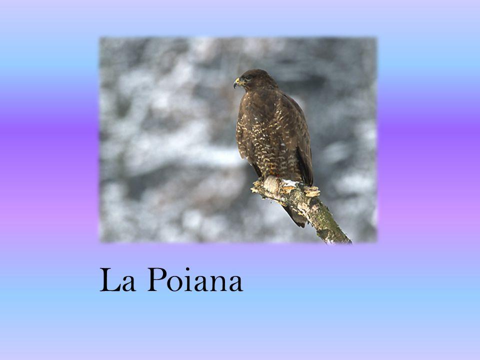 La Poiana