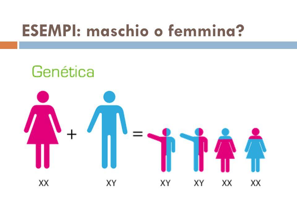 ESEMPI: maschio o femmina
