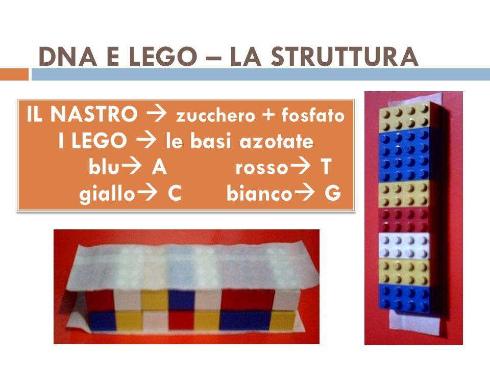 DNA E LEGO – LA STRUTTURA