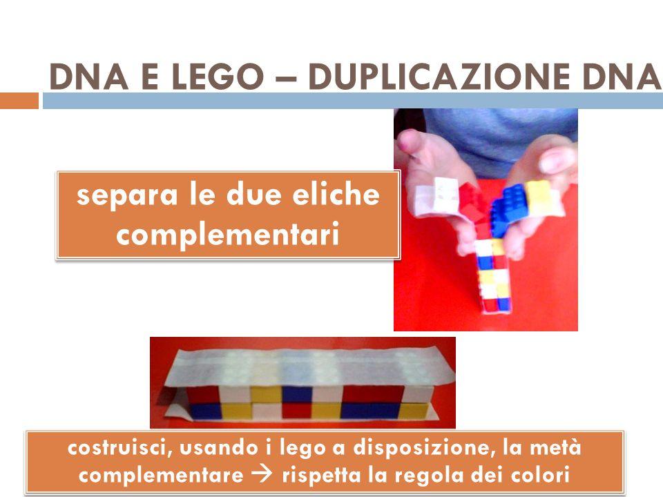DNA E LEGO – DUPLICAZIONE DNA