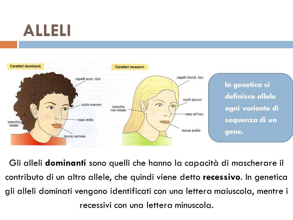 ALLELI In genetica si definisce allele ogni variante di sequenza di un gene.