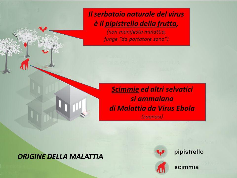 Il serbatoio naturale del virus è il pipistrello della frutta,
