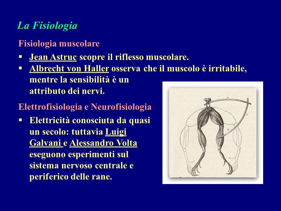 La Fisiologia Fisiologia muscolare