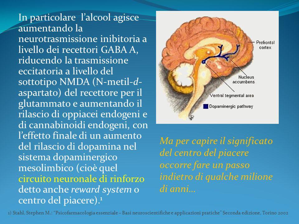 In particolare l'alcool agisce aumentando la neurotrasmissione inibitoria a livello dei recettori GABA A, riducendo la trasmissione eccitatoria a livello del sottotipo NMDA (N-metil-d-aspartato) del recettore per il glutammato e aumentando il rilascio di oppiacei endogeni e di cannabinoidi endogeni, con l'effetto finale di un aumento del rilascio di dopamina nel sistema dopaminergico mesolimbico (cioè quel circuito neuronale di rinforzo detto anche reward system o centro del piacere).1