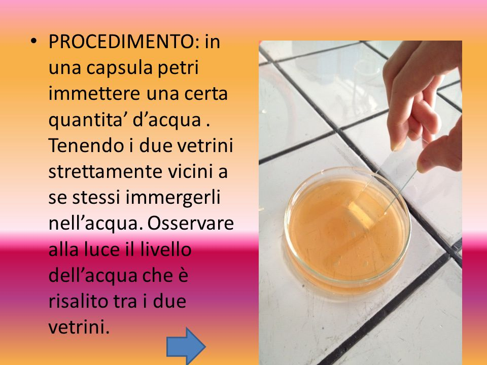 PROCEDIMENTO: in una capsula petri immettere una certa quantita' d'acqua .