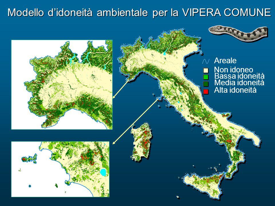 Modello d'idoneità ambientale per la VIPERA COMUNE