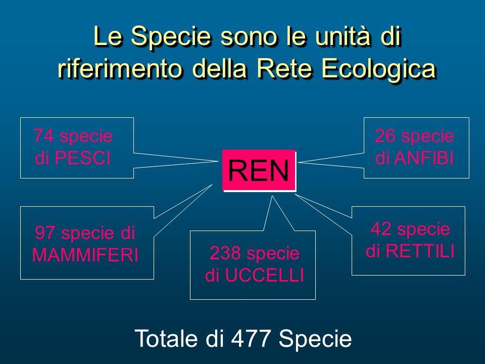 Le Specie sono le unità di riferimento della Rete Ecologica