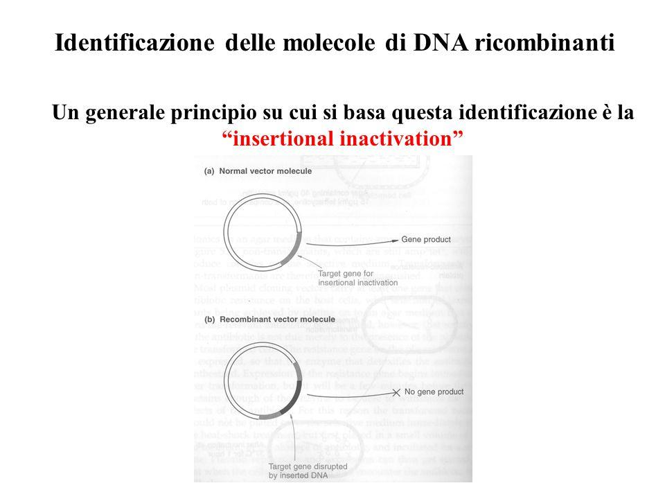 Identificazione delle molecole di DNA ricombinanti