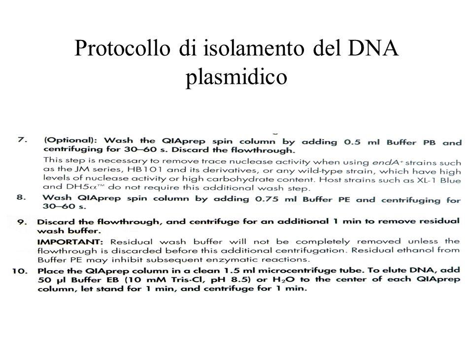 Protocollo di isolamento del DNA plasmidico