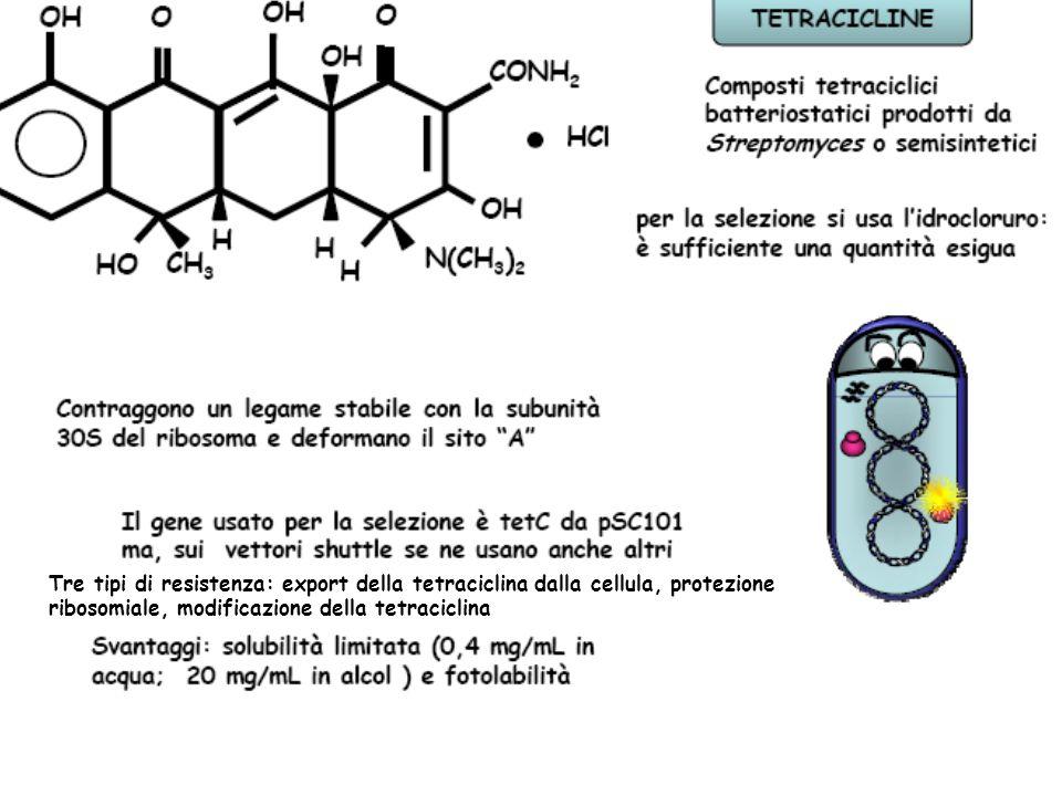 Tre tipi di resistenza: export della tetraciclina dalla cellula, protezione ribosomiale, modificazione della tetraciclina