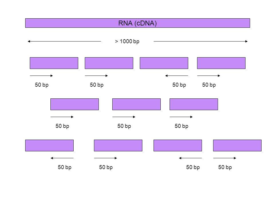 RNA (cDNA) > 1000 bp 50 bp 50 bp 50 bp 50 bp 50 bp 50 bp 50 bp