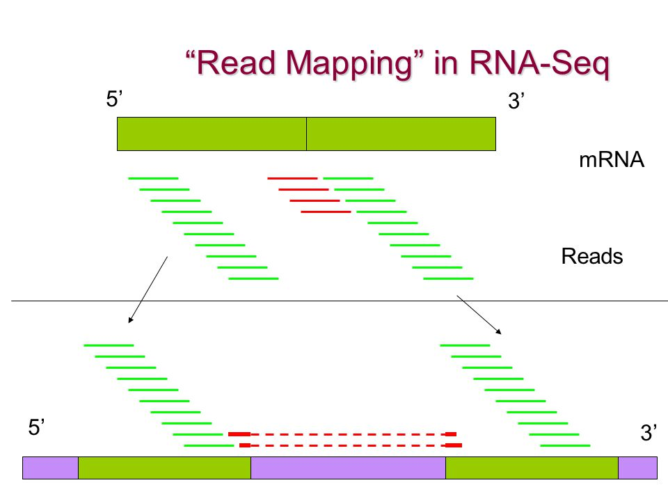 Read Mapping in RNA-Seq