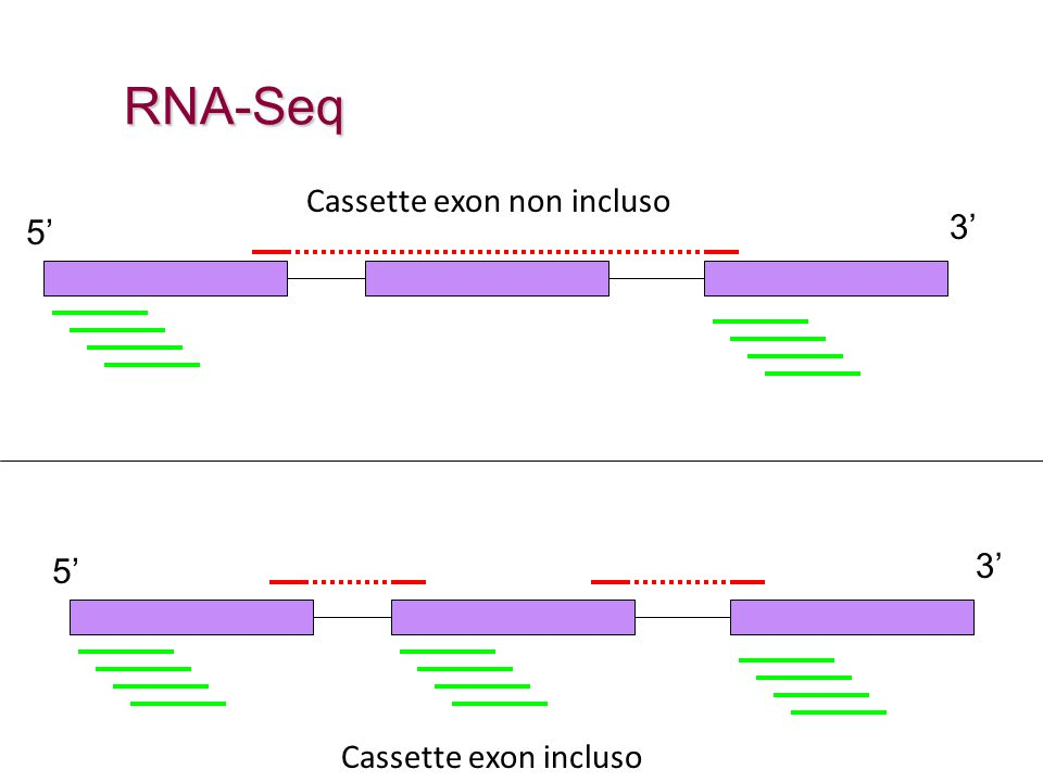 RNA-Seq Cassette exon non incluso 5' 3' 5' 3' Cassette exon incluso
